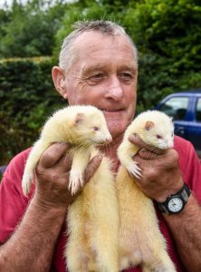 Ferret racer of Exmoor