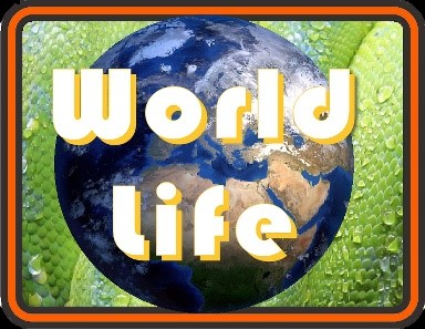 World Life at Abbotsbury Children's Farm
