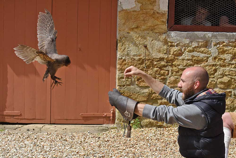 Barn owl flying at Abbotsbury Children's Farm
