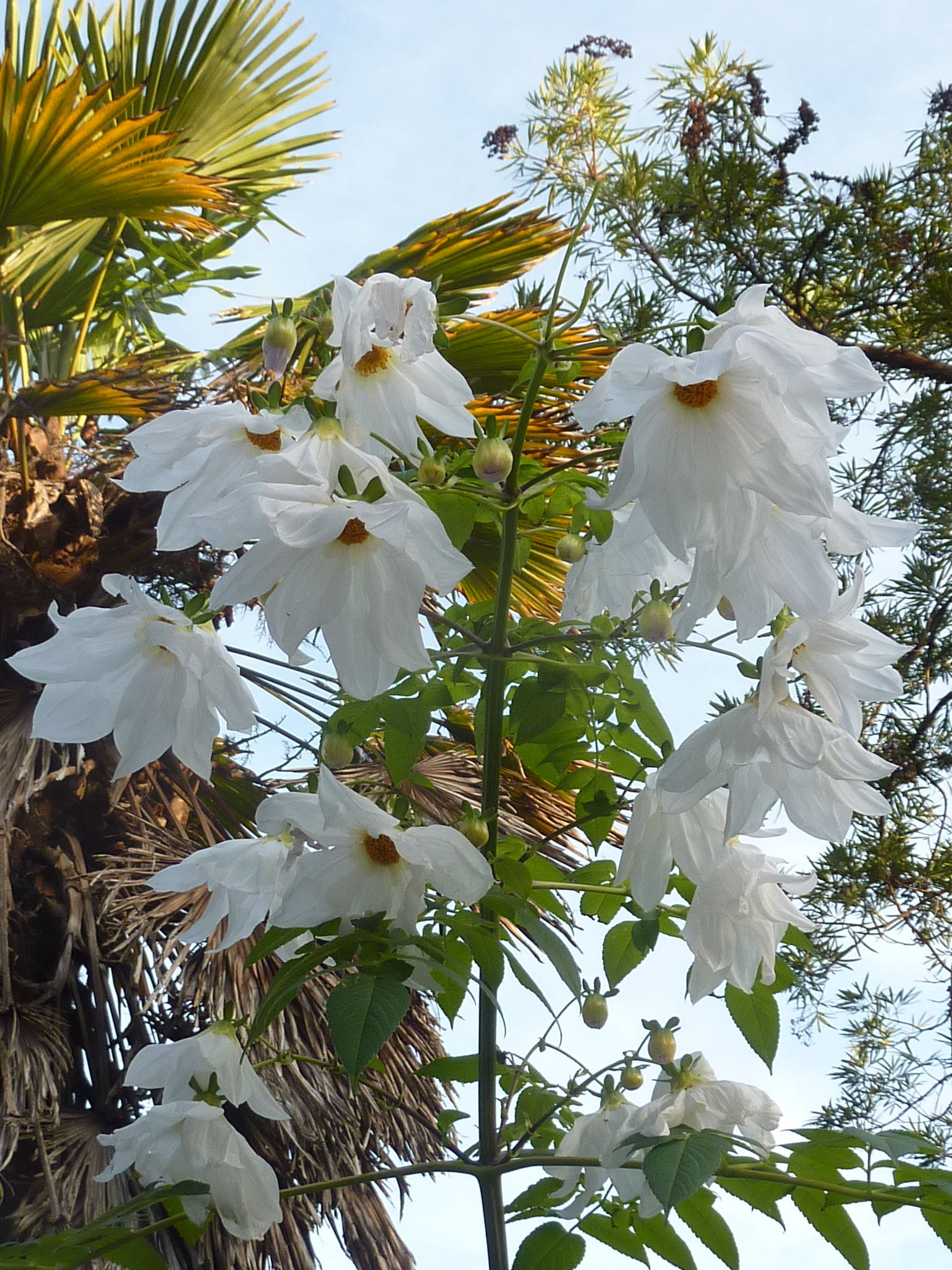 A last blast of flower power – Abbotsbury Subtropical Gardens