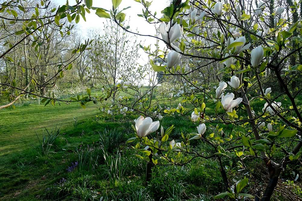 Magnolia walk