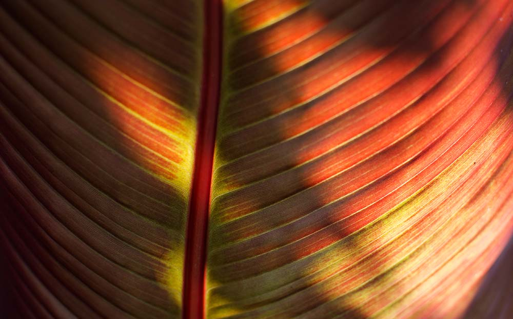 Close-up of lines on a tropical leaf