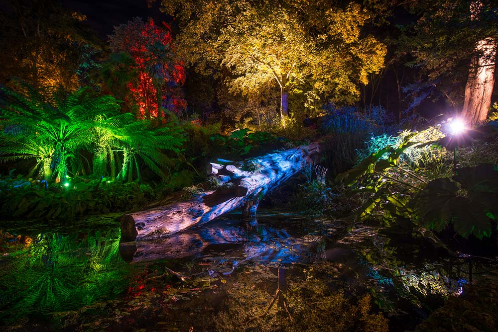 Fallen Tree In The Woodland Valley, Lit Up By The Enchanted Illuminations