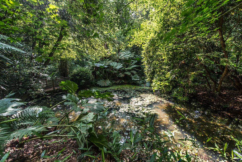 The Jurassic Garden