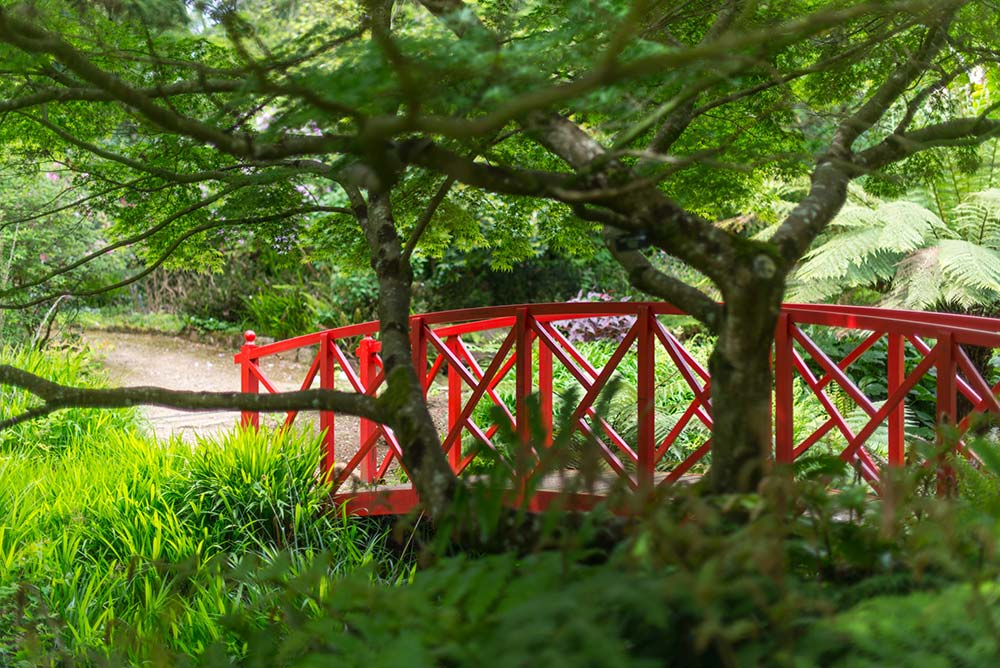 A Red Bridge In The Shade Of A Japanese Maple