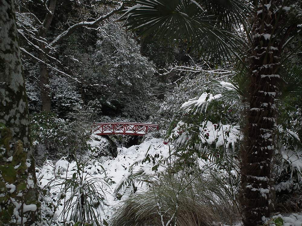 Red Bridge Amongst The Snow