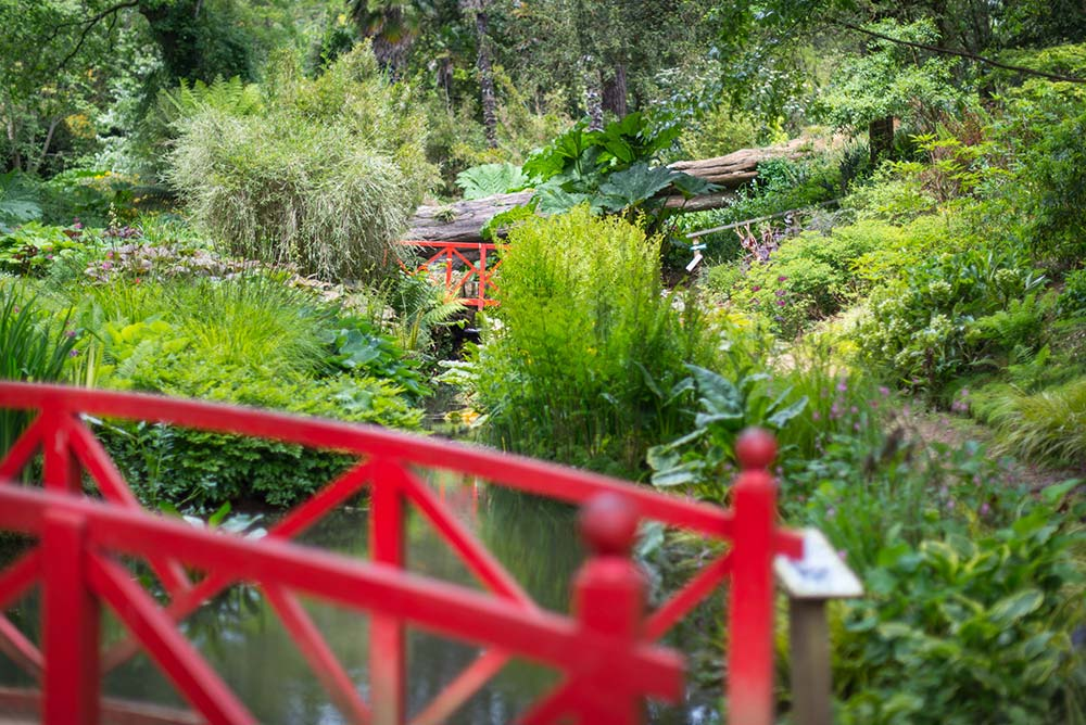 Red Bridges In The Woodland Valley