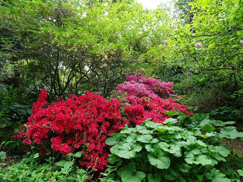 Reds And Pinks Amongst The Foliage