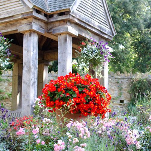 Abbotsbury Subtropical Gardens today