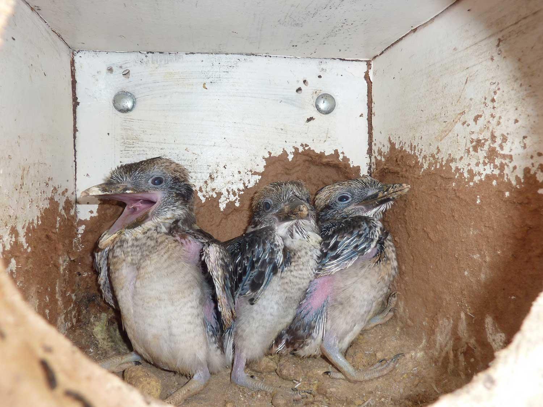 Chicks-in-2011