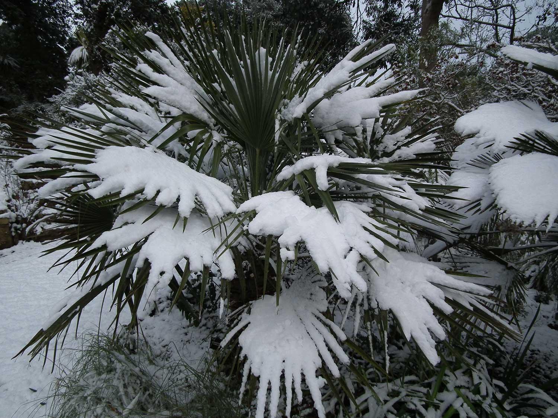 Dec-2010-062