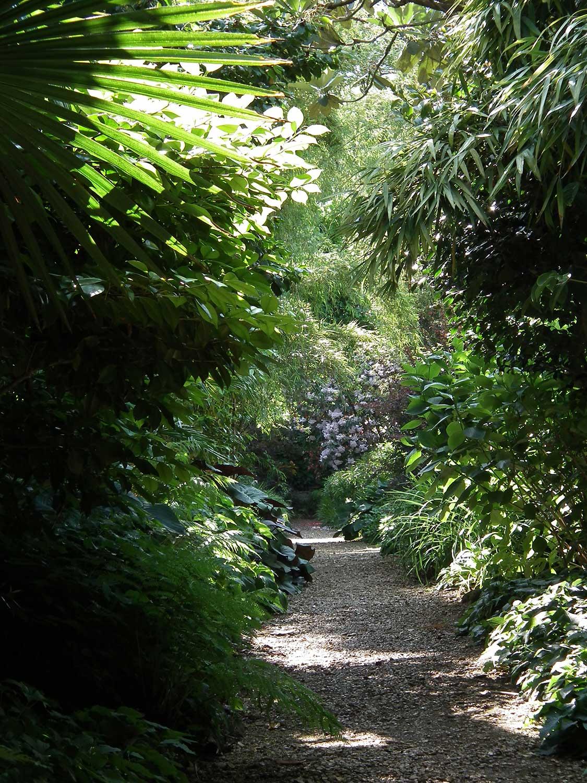 Jungle-ride