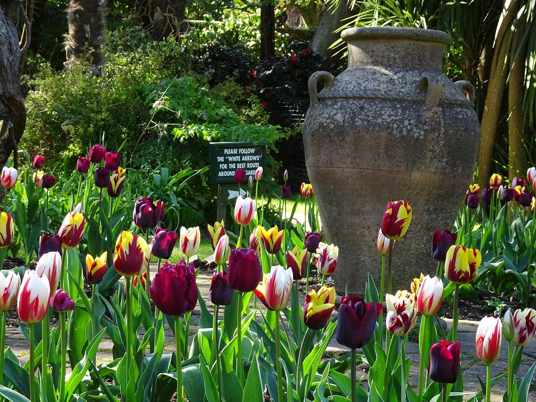 Mixed-tulips