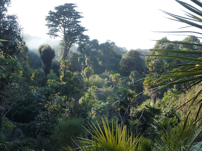 Morning-mist-in-the-Abbotsbury-jungle