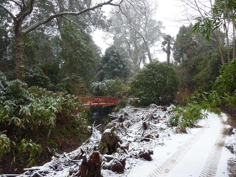 Snow-in-Jan-2010