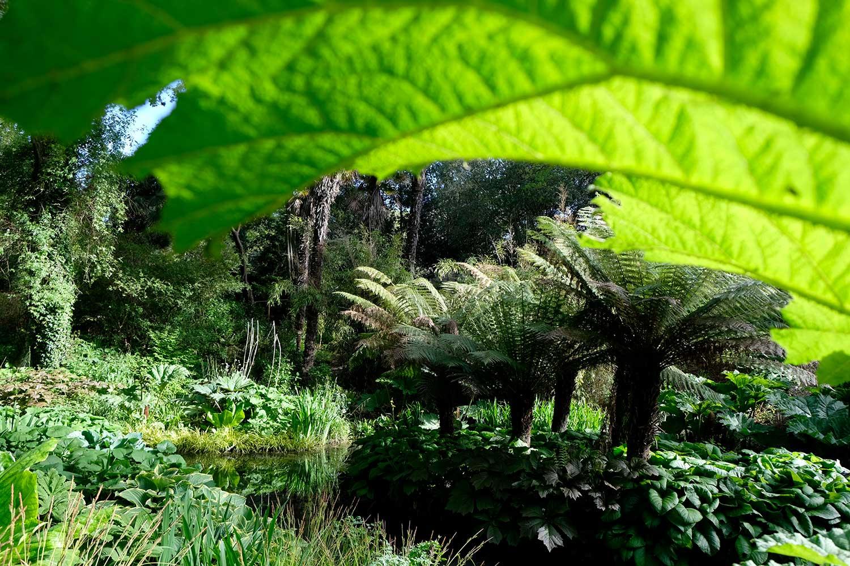 Tree-fern-island