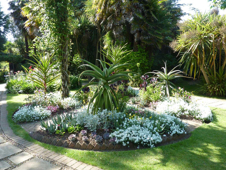 Vic-Garden-Aloes