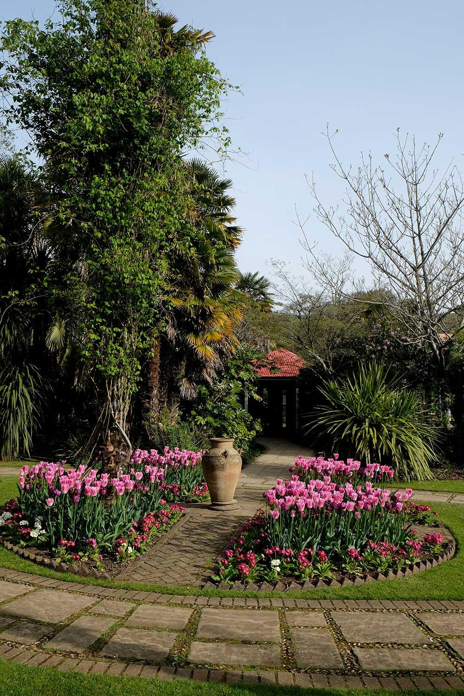 Vic-garden-tulips