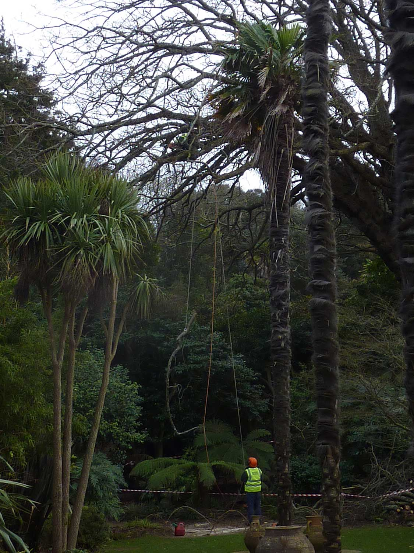 Jan-feb-2010-Wingnut-tree