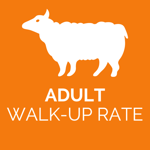 CF-Adult-regular