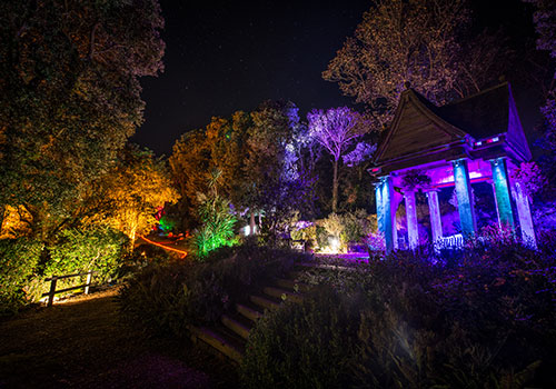 The Enchanted Floodlit Garden at Abbotsbury Subtropical Gardens