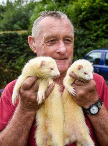 Ferret racer of Exmoor