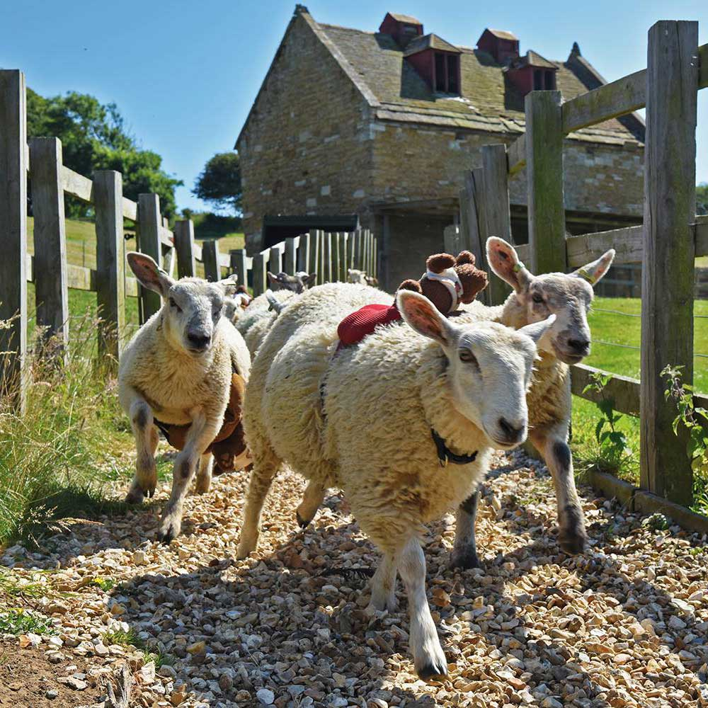 Abbotsbury Children's Farm Activity Schedule