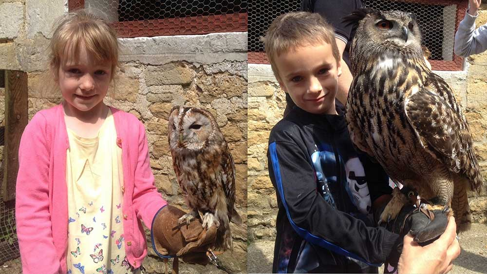 Owl Flying Displays at Abbotsbury Children's Farm