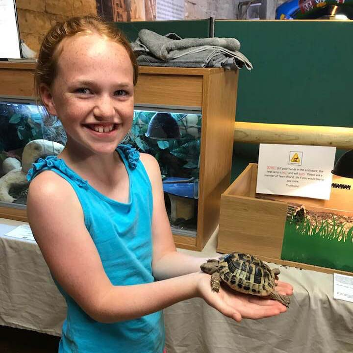 World Life Tortoise Handling At Abbotsbury Children's Farm