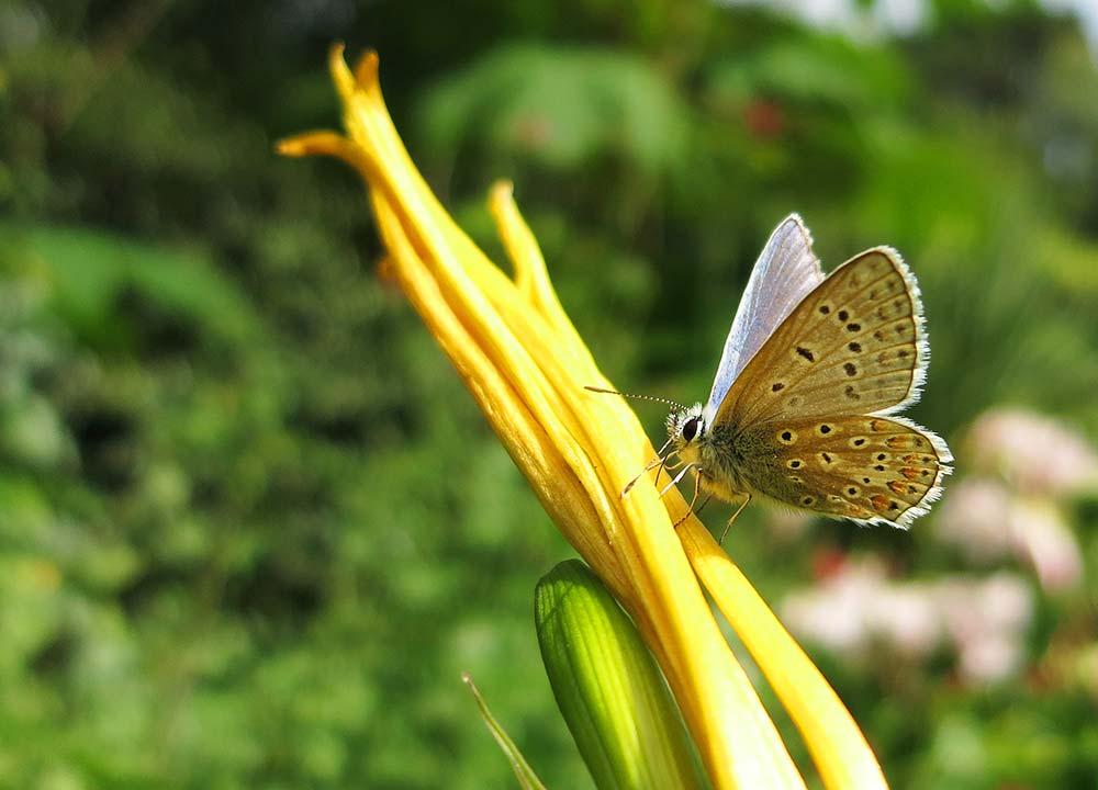 Butterflies Are Aplenty In The Gardens In August