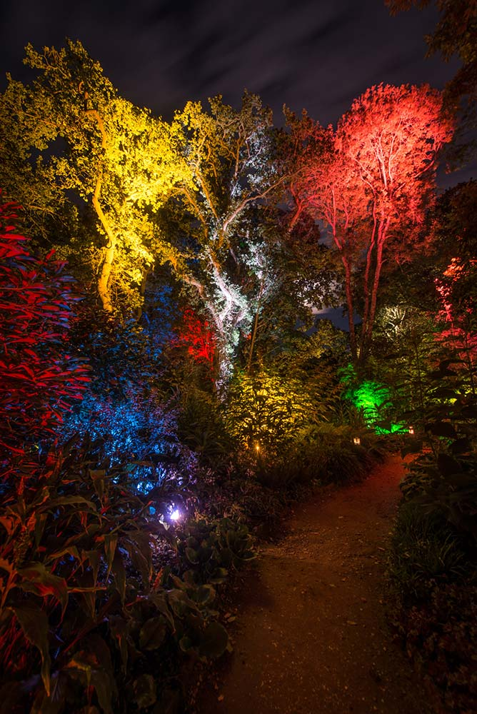 Colourful Trees During The Enchanted Illuminations