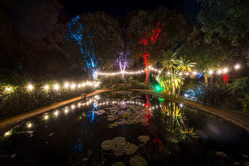 Lily Ponds During The Enchanted Illuminations