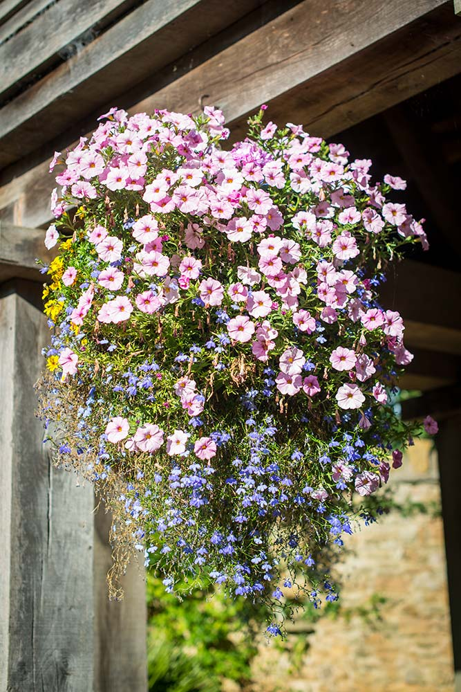A Hanging Basket On The Pavilion In The Sunshine