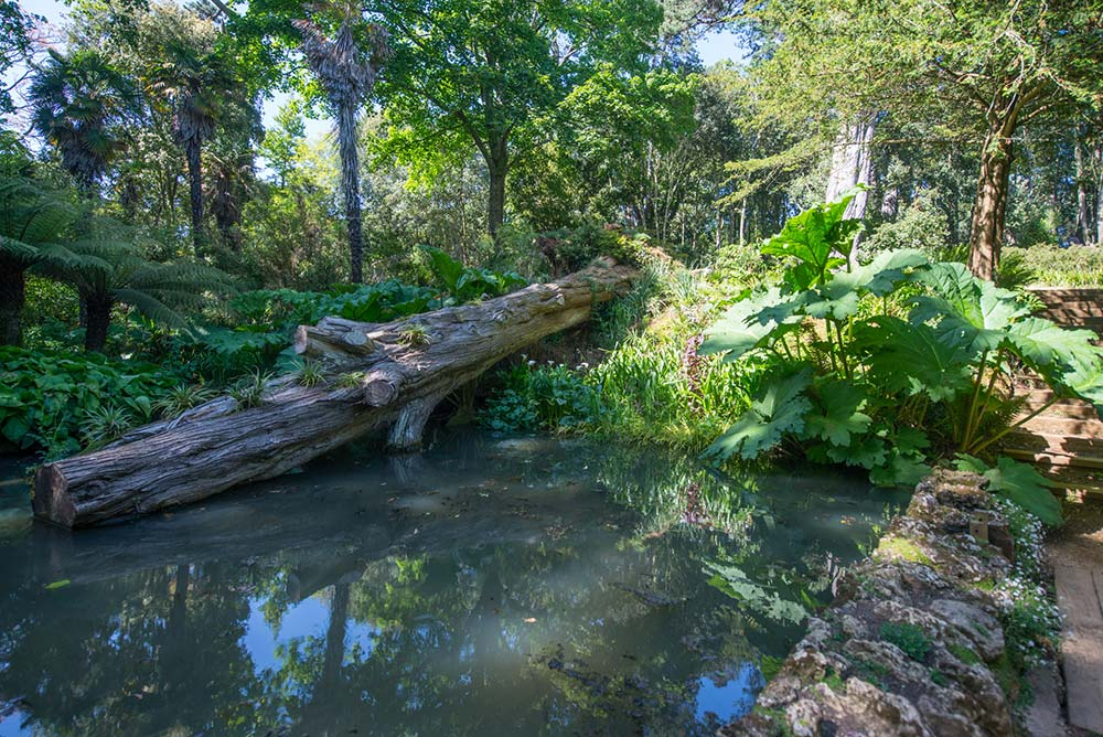 The pond and fallen tree in the Woodland Valley