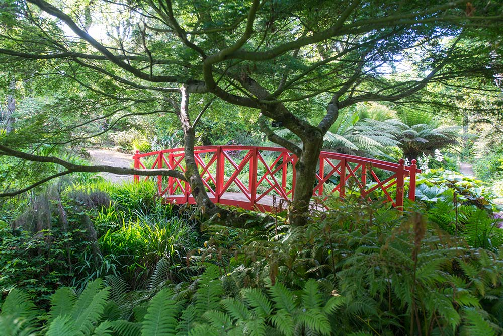 Red bridge under Acer palmatum