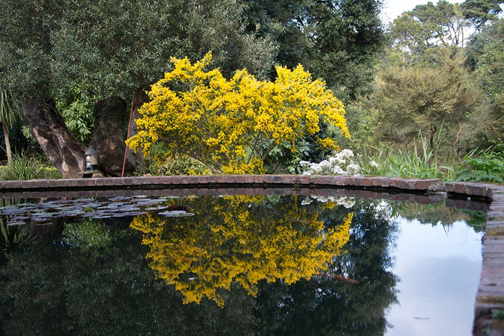 Reflections On The Lily Ponds