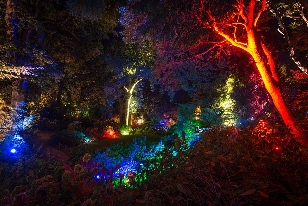 Wide view of the Woodland Valley during the Enchanted Illuminations