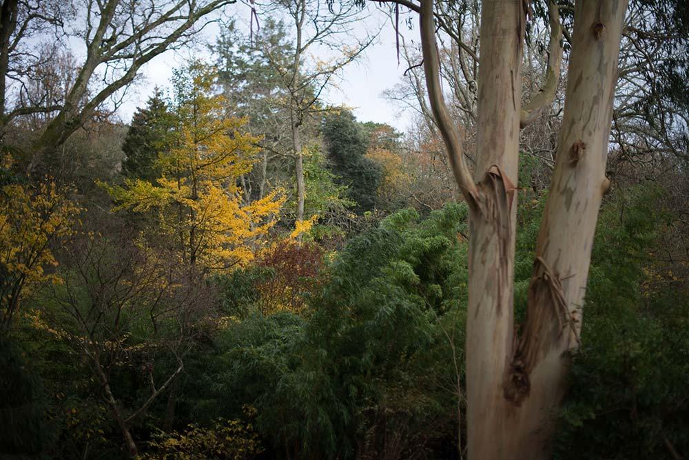 Winter Tree Line Across The Gardens