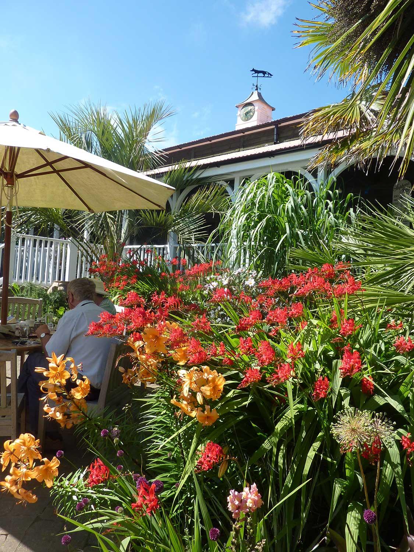 Crocosmia-in-Tea-garden