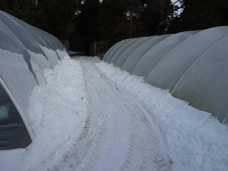 Nursery-tunnels-Jan-2011