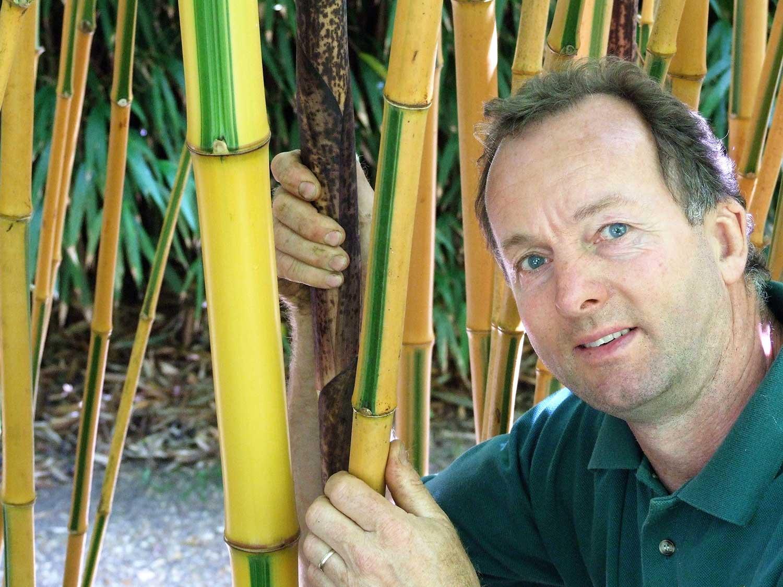 Phyllostachys-bambusoides-'castillonis'