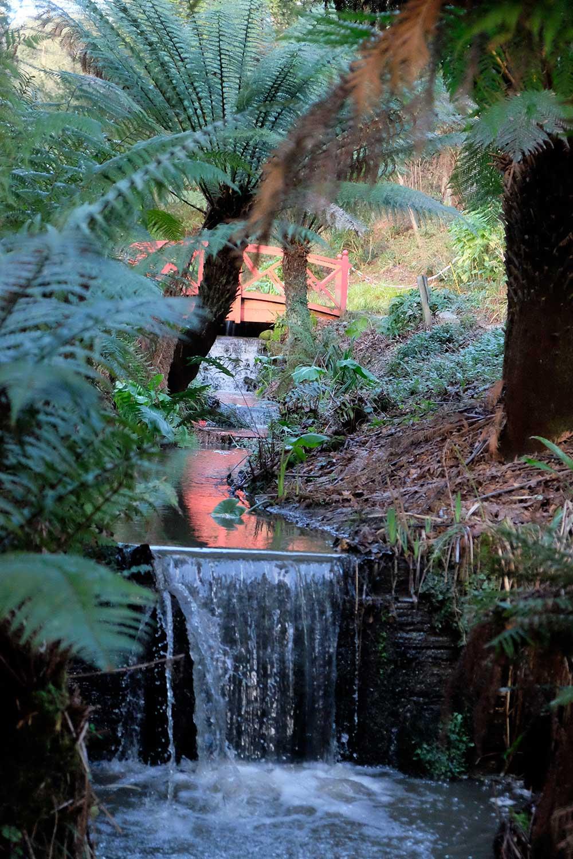 Tree-ferns-near-sluice-gate