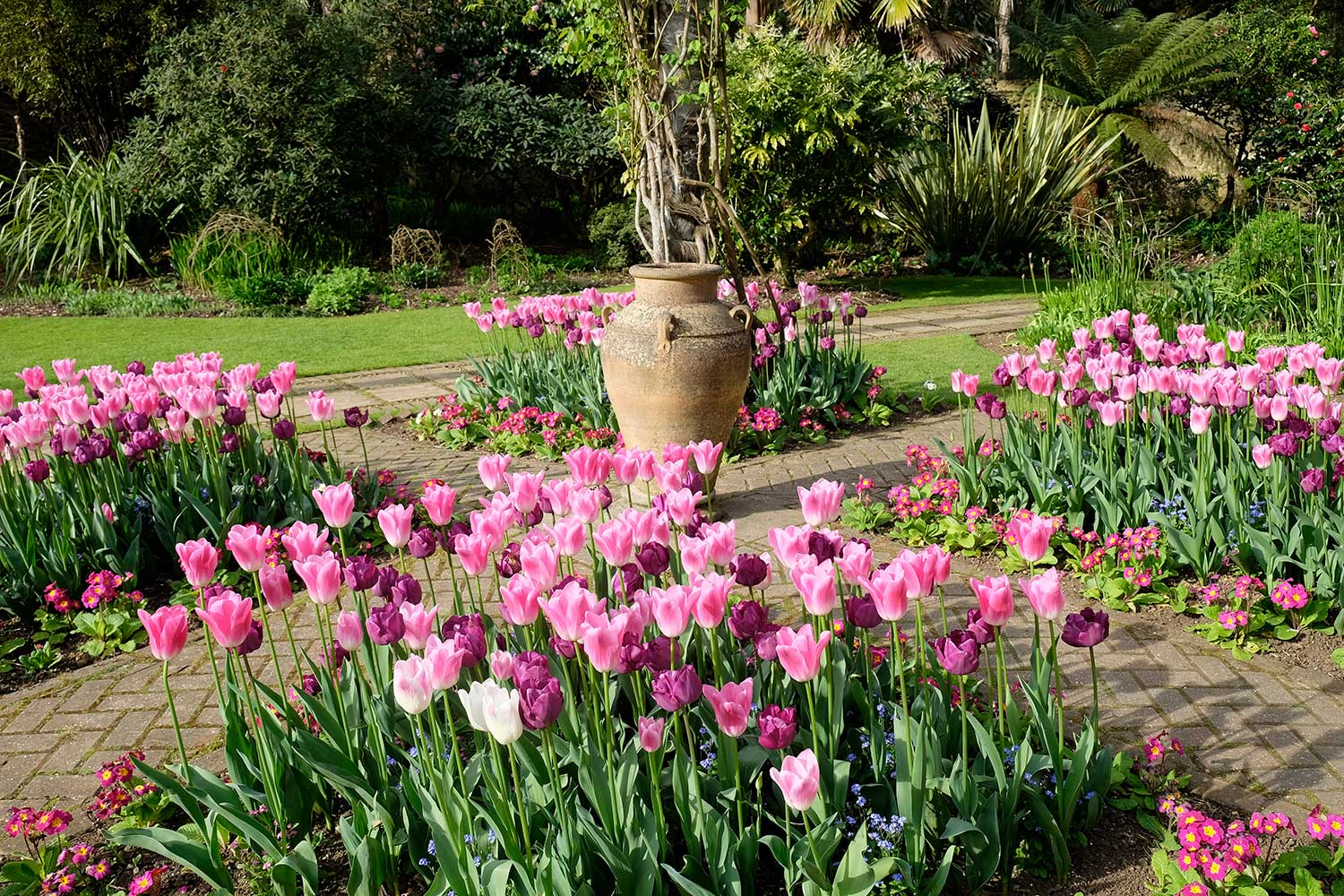 Tulips-in-island-bed