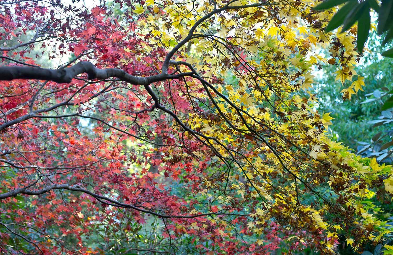 Winter colours at Abbotsbury Subtropical Gardens
