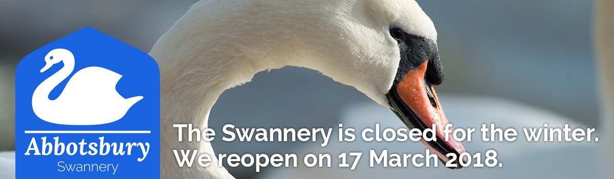 Visit Abbotsbury Swannery's website